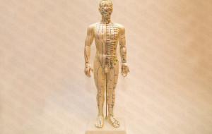 Муляж тела человека (на подставке) Китай
