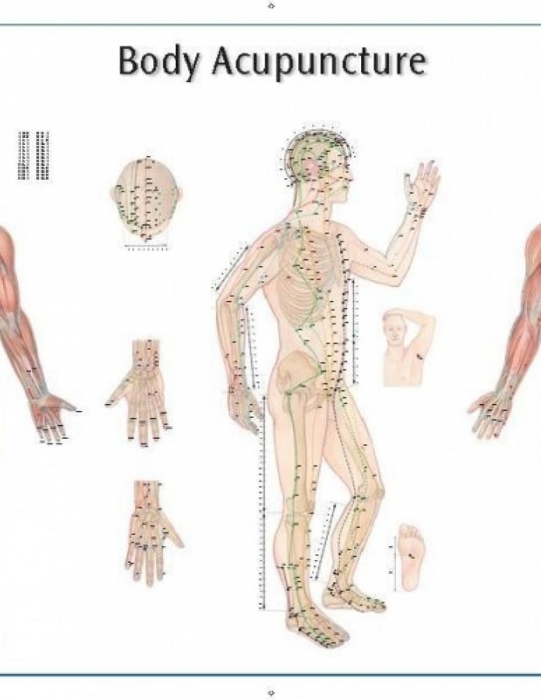 Плакат человека (набор)